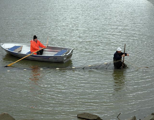 Notabfischung der Talsperre Loßnitz