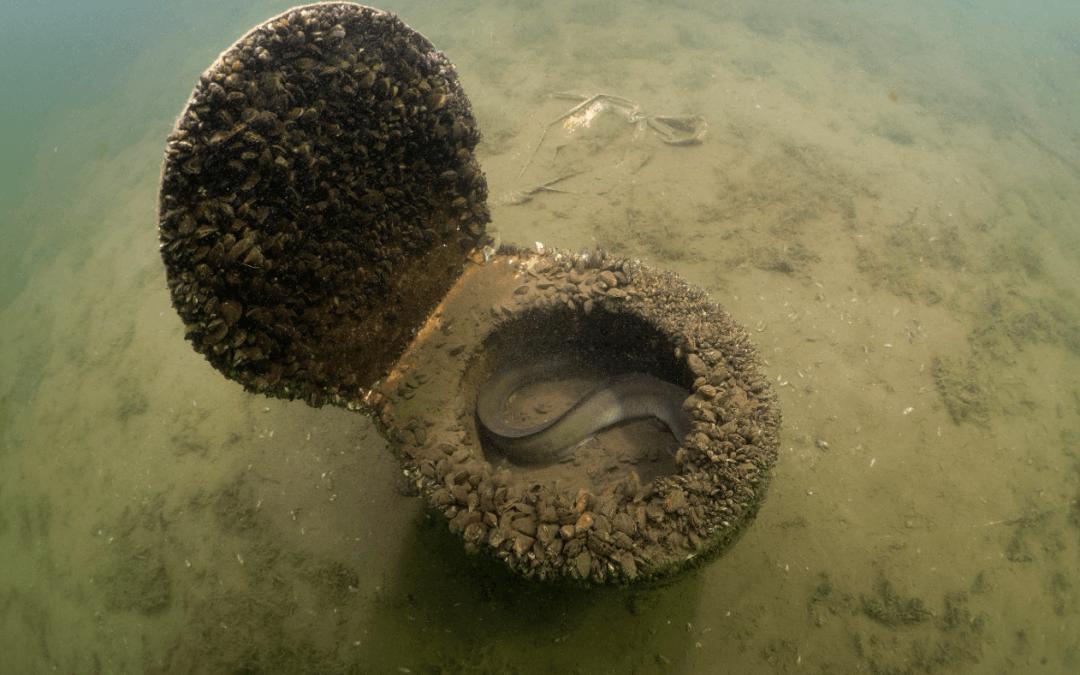 Wichtigkeit von Gewässerschutz und Strukturen in Gewässern – 8. Juni Tag des Meeres